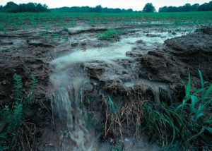 An example of nutrient pollution