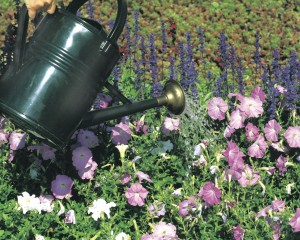 Water plants properly to conserve Lehigh County Authority Water